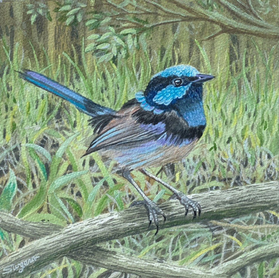 Blue Wren ll