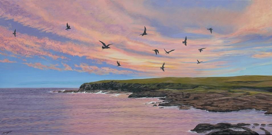 Evening Seagulls
