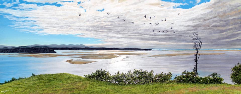 Gulls over Mallacoota
